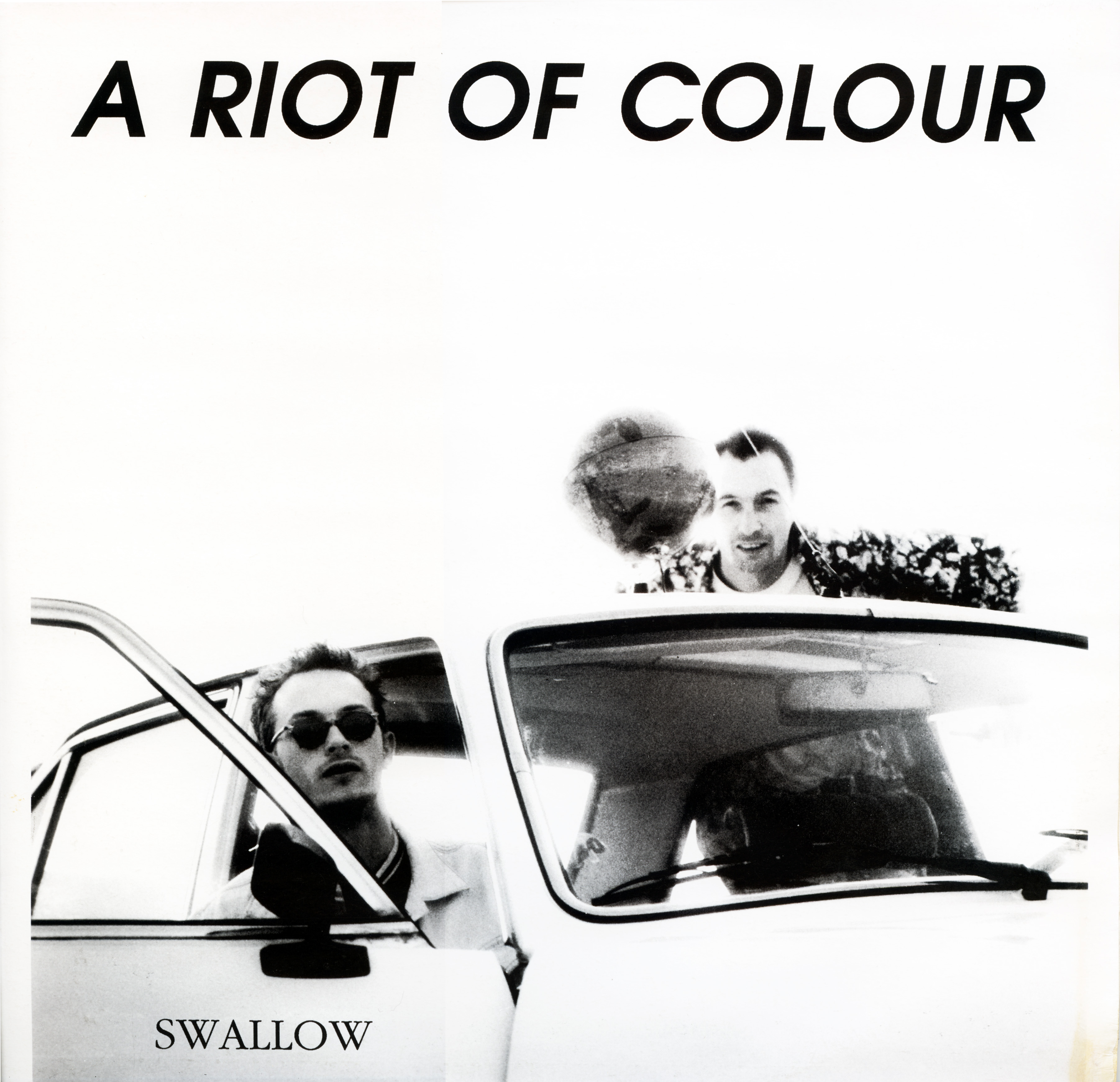 a riot of colour swallow front